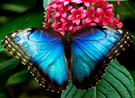 Colorful photo of butterfly