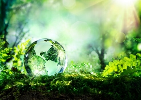 A glass ball in a forest