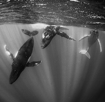 picture of whales under water with sun light entering